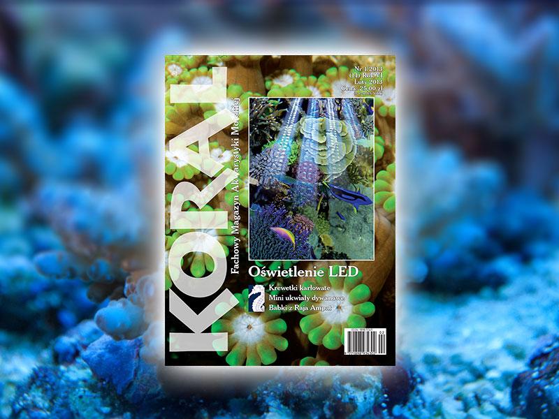 Koral 1/2013