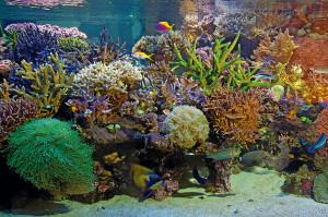 Tak fascynujące akwarium rafowe może funkcjonować tylko wówczas, jeśli do akwariowej wody nie trafiają żadne szkodliwe jony metali. Fot. D. Knop