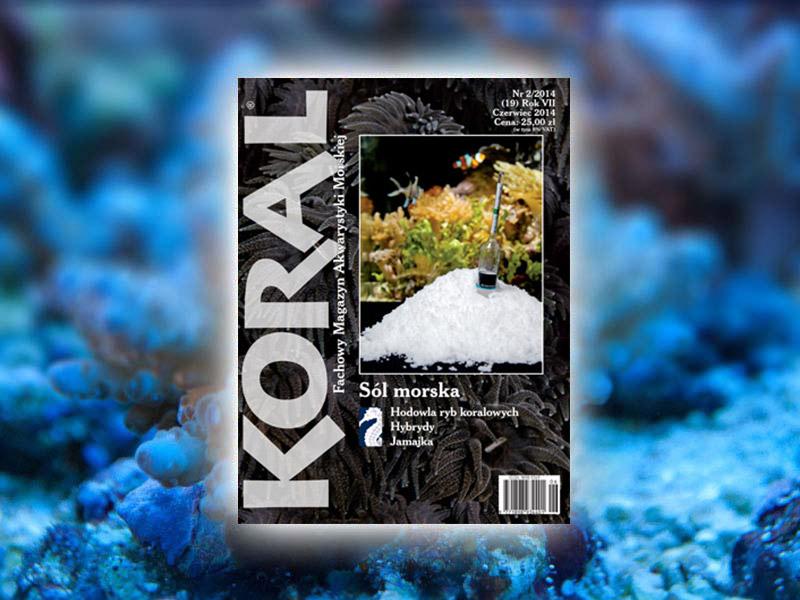 magazyn koral 2 2014