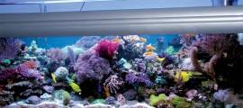Ogólny widok akwarium